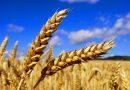 «S'il meurt, le grain de blé porte beaucoup de fruit»
